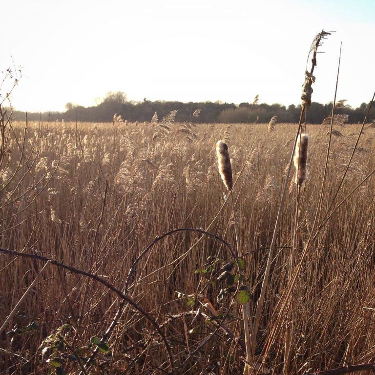 a photograph of Hen Reedbeds nature reserve by Catherine Coulson © 2020 Catherine Coulson