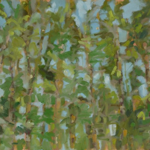 a photograph of an oil painting title 'Scots Pines' by artist Catherine Coulson © 2018 Catherine Coulson