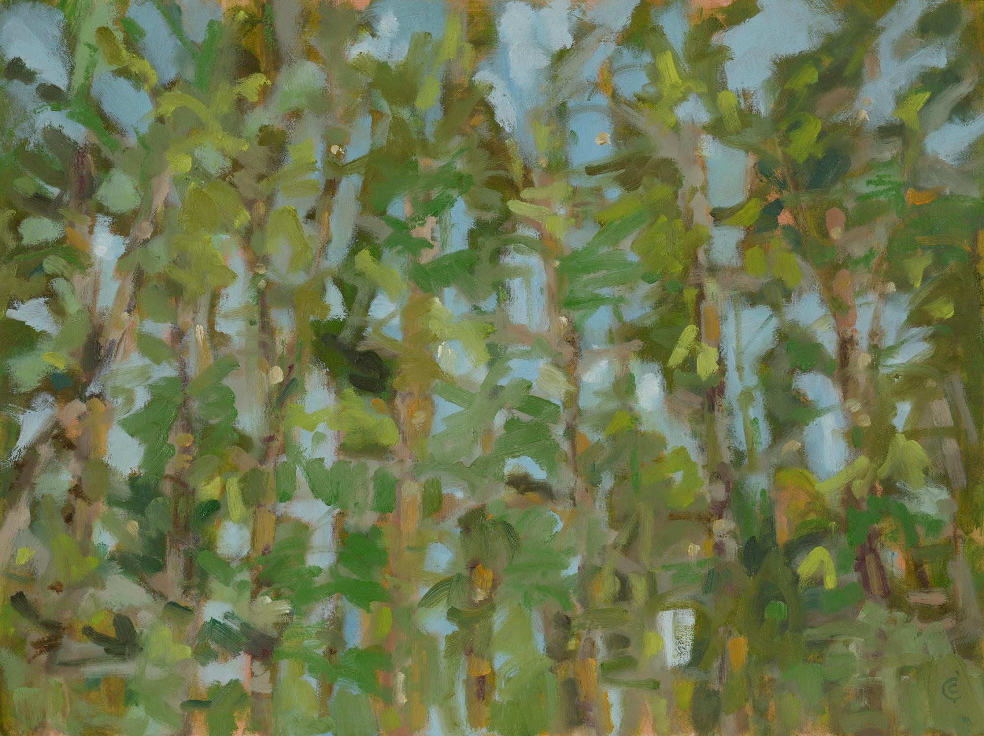 Scots Pines, Kirkconnell Flow