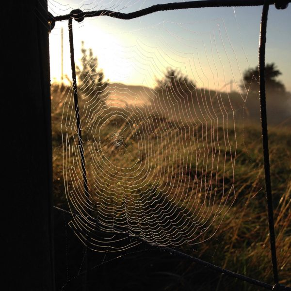 photograph of a cobweb on a fence wire, misty morning by Catherine Coulson © 2020 Catherine Coulson