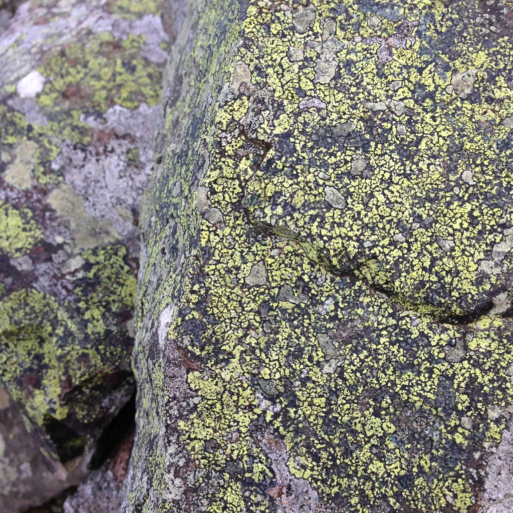 a photograph of a boulder covered in yellow lichen © Catherine Coulson catcoulson.art
