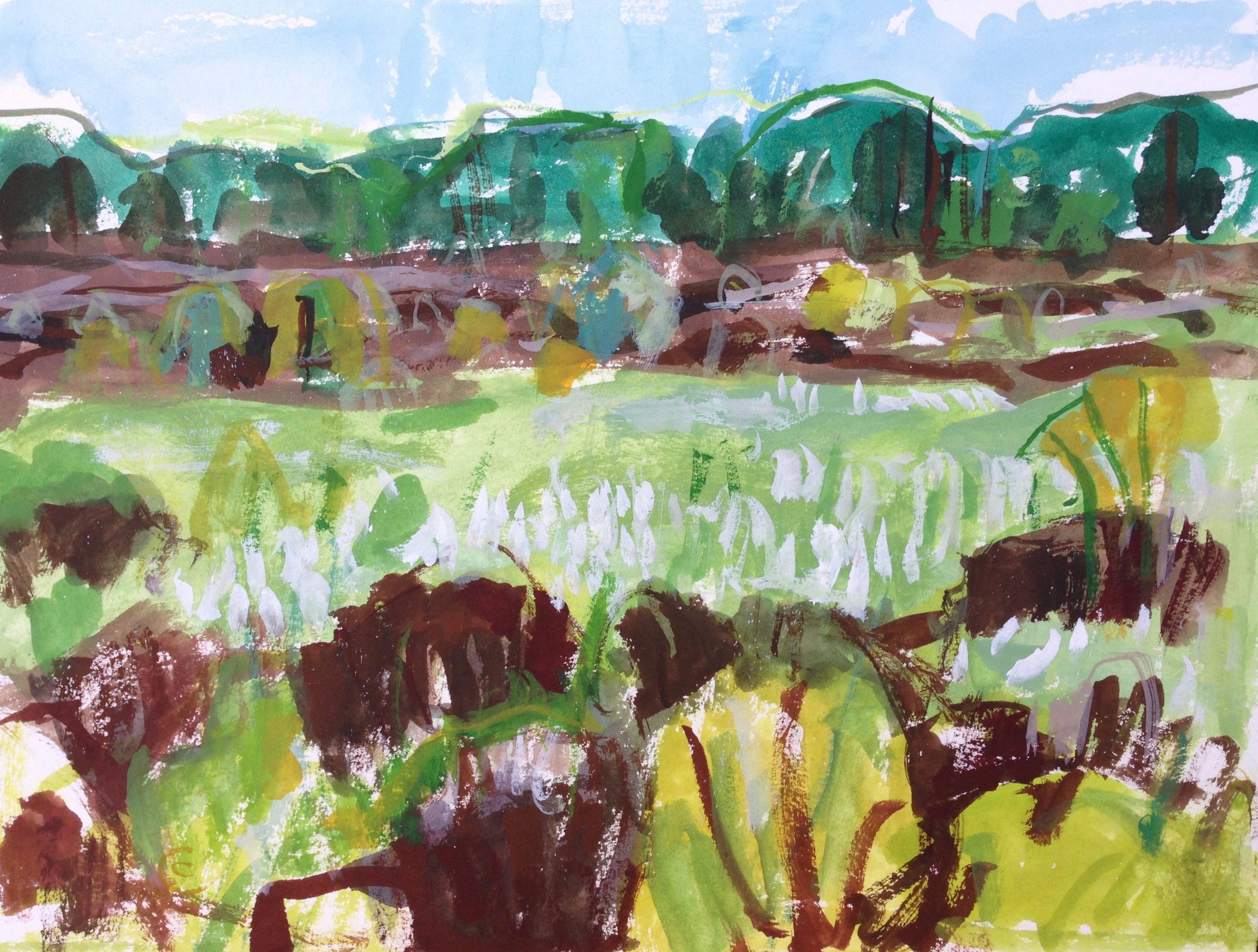 Cottongrass and Peat, Kirkconnell Flow