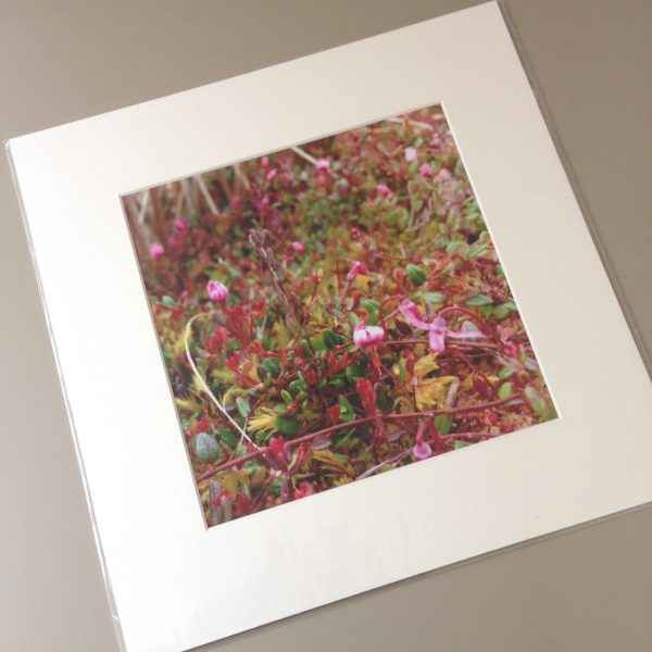 Mounted photograph, product shot © 2020 Catherine Coulson