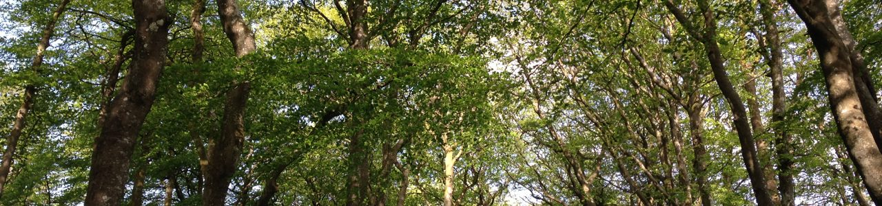 Birdsong and beech trees…