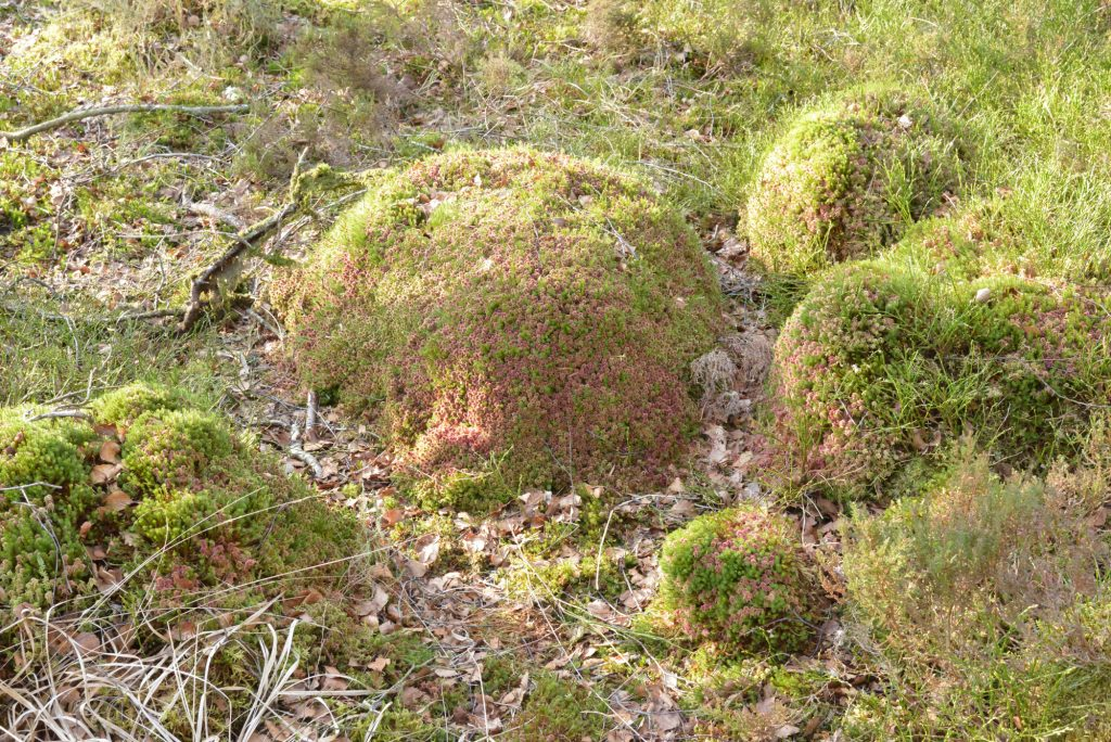A photograph of mounds of sphagnum moss and other mosses, March, Kirkconnell Flow © Catherine Coulson 2020 catcoulson.art