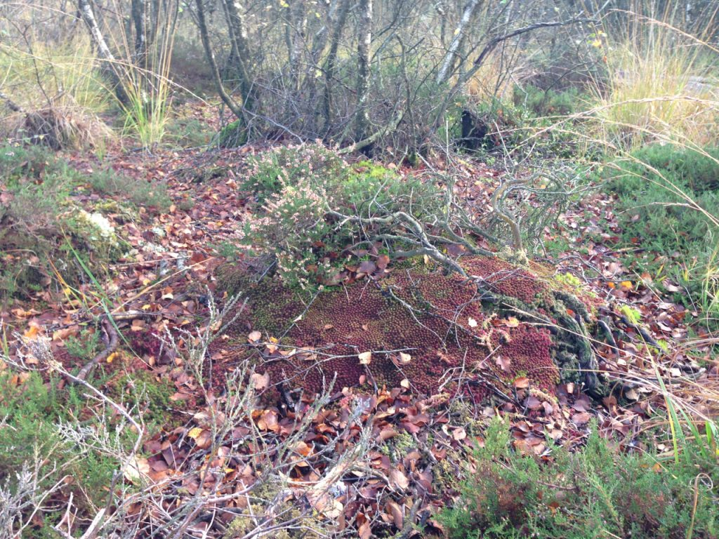 A photograph of Sphagnum Mound, October, Kirkconnell Flow © Catherine Coulson 2020 catcoulson.art