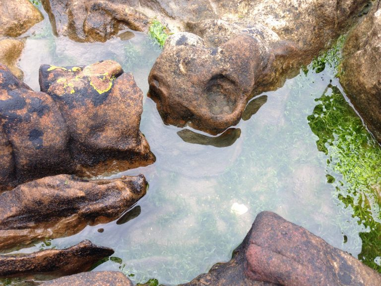a photograph of a rockpool, Arbigland bay, October 2020 © Catherine Coulson 2020 catcoulson.art