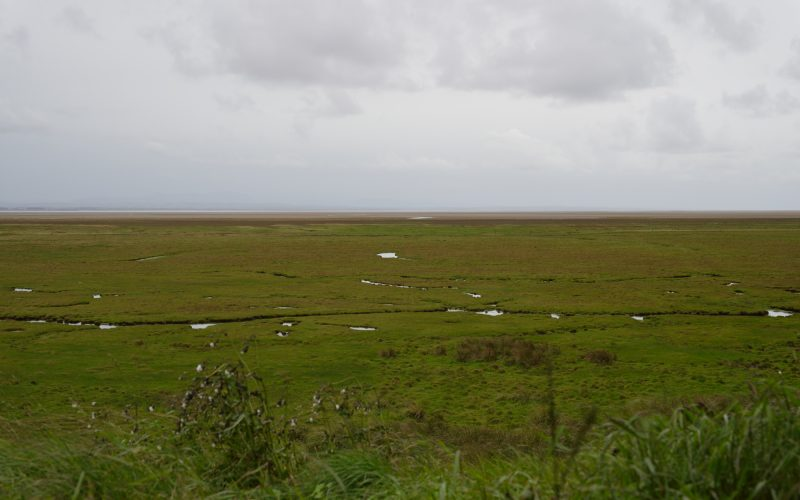 Across the Merse, WWT Caerlaverock