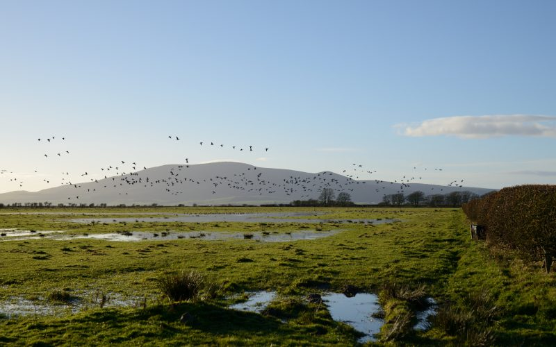 Towards Criffel, Caerlaverock